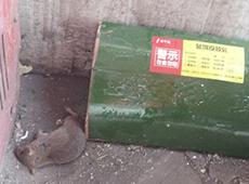 灭老鼠现场图